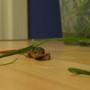 Angry_newt