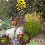 S.d._botanical_gardens_quail_03_01_11_54_