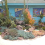 Rock Garden: Aeonium, Cacti, Aloe, Euphorbia (Aeonium, Cacti, Aloe, Euphorbia)