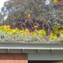 S.d._botanical_gardens_quail_03_01_11_72_