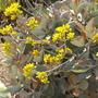 S.d._botanical_gardens_quail_03_01_11_75_