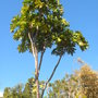 S.d._botanical_gardens_quail_03_01_11_92_