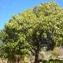 S.d._botanical_gardens_quail_03_01_11_97_
