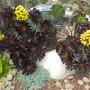 S.d._botanical_gardens_quail_03_01_11_58_