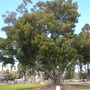 Balboa_park_03_03_11_41_