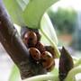 Ladybird Gathering