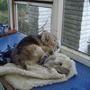 lucky trying to keep warm in allotment greenhouse