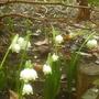 Spring_snowflakes