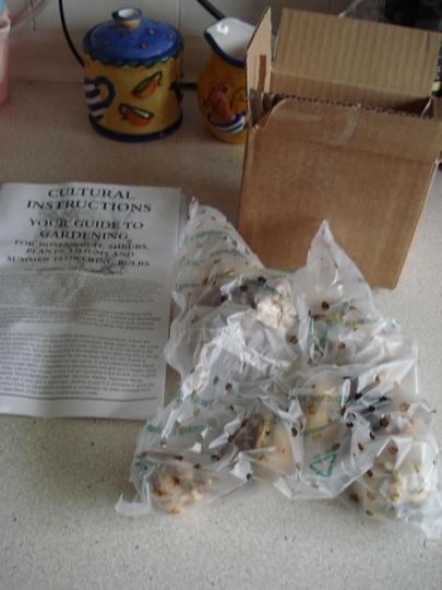 Short stemmed lily bulbs (10)
