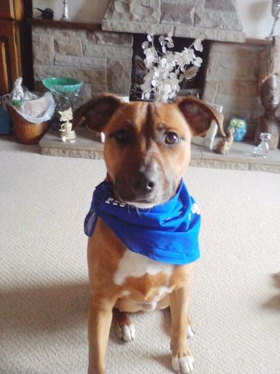 Rocky in his 'free' bandana