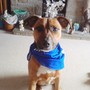 Rocky in his 'free' bandana