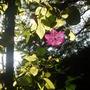 Garden_2007_058