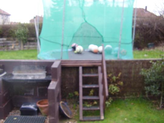 Operation take over neighbours garden