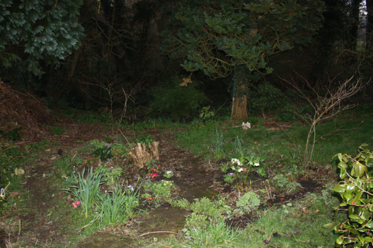 The bottom of the garden in the evening - March 2011