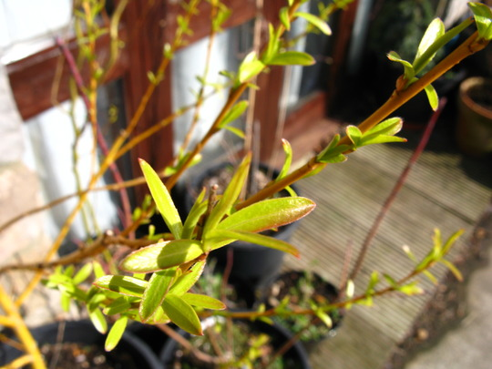 Salix starts