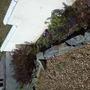 flower bed in front garden