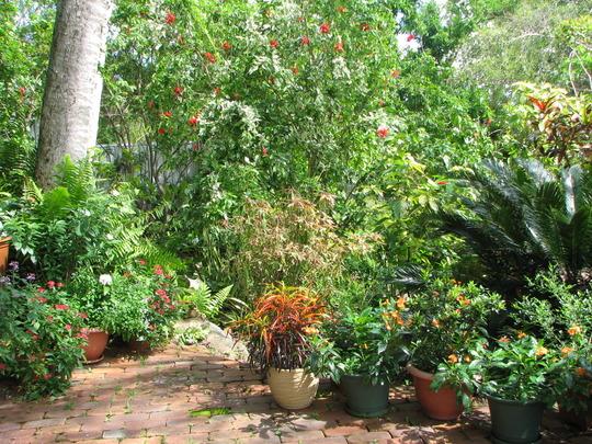 Beginning of Autumn in N.E. Downunder - Courtyard Garden In Recovery