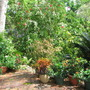 Beginning of Autumn in N.E. Downunder - Courtyard Garden In Recovery