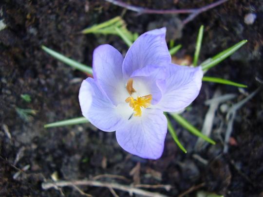 nice ? flower