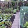 Veg_garden_010