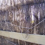 Brushwood screen falling to pieces 1