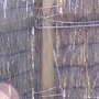 Brushwood screen falling to pieces 2