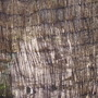 Brushwood screen falling to pieces 5