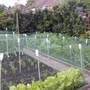 Veg_garden_011