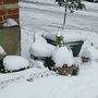 Snow covered pots