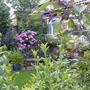 Garden2007no.2_001