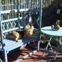 lucky enjoys sunshine in back garden