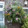 Garden2007no.2_044