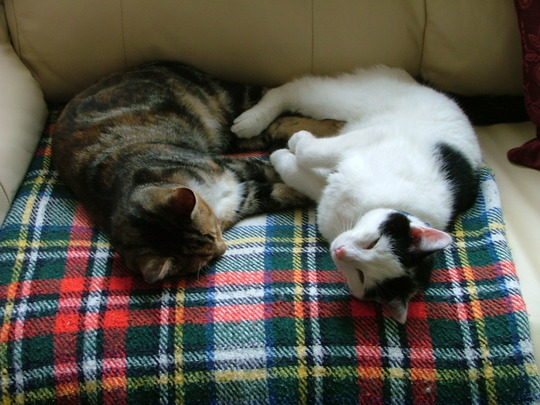 Tilly & Jack having afternoon sleep