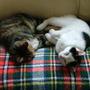 Tilly & Jack having afternoon sleep