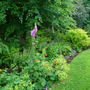 Back Garden End of June 2010