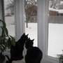 cats in the window wishing it wasn't a February ice and snow day