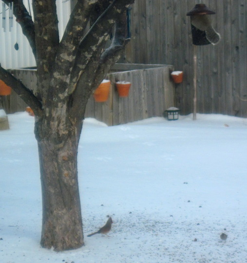 Squirrel pouring out birdseed while gorging himself
