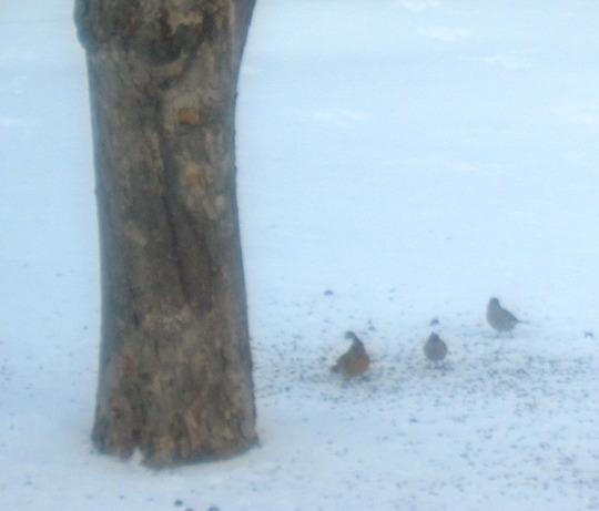 birds standing on the ice