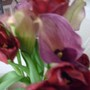 The bunch of tulips came with three mini calla lilies in light purple.