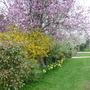 Blossom in front garden