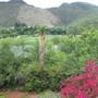 Front view (Bougainvillia, Aloe)