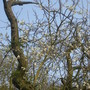 Damson and Woodpecker Holes