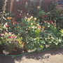 Image_garden4
