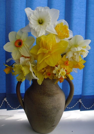 Daffodils picked from my garden