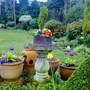 My old Birdbath/planter   for Whistonlass