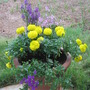Flower Pot Idea, Annuals