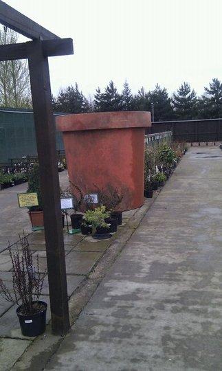 Biggest plant pot i've ever seen!!