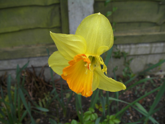 This means war! (Narcissus)