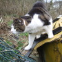 Spike on wheelbarrow (Spikeus Botanicus)