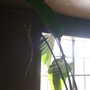 So this is not a banana tree.  It's a giant bird of paradise (as discovered by various GoY members!! thank you!!)